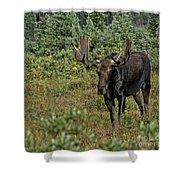 Moose In Shrubs Shower Curtain