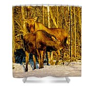 Moose In The Morning Shower Curtain
