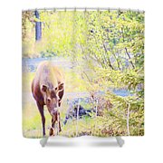 Moose In The Yard Shower Curtain