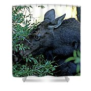 Moose In Wyoming # 3 Shower Curtain