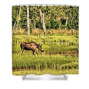 Moose Meadows Shower Curtain