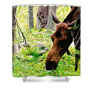 Moose Munching Shower Curtain