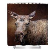 Moose Portrait Shower Curtain