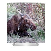 Moose Relaxing Shower Curtain