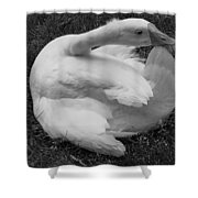 Moose The Goose Shower Curtain
