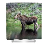 Moose Yellowstone Np_grk6918_05222018 Shower Curtain