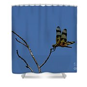 More Jeweled Wings Shower Curtain