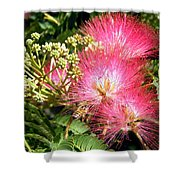 More Mimosa Shower Curtain