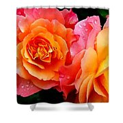 More Roses For Anne Catus 1 No. 1 H A Shower Curtain