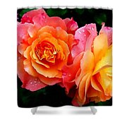 More Roses For Anne Catus 1 No. 1 H B Shower Curtain