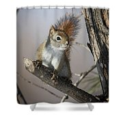 More Seeds Please Shower Curtain