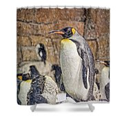 More Snow - King Penguin Shower Curtain