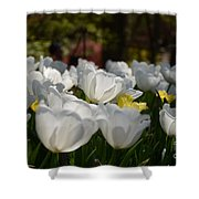 More White Tulips Shower Curtain
