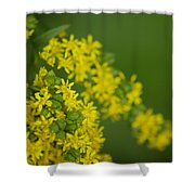 More Yellow Shower Curtain