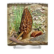 Morel Mushroom - Green Lane Pa Shower Curtain