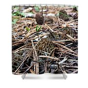 Morels A Plenty  Shower Curtain