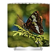 Mormon Metalmark Shower Curtain