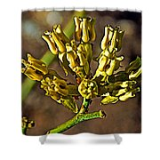 Mormon Tea On Tahquitz Canyon Way In Palm Springs-california Shower Curtain
