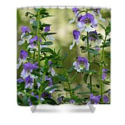 Morning Beauty Shower Curtain
