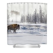 Morning Bison 4  7912-4 Shower Curtain