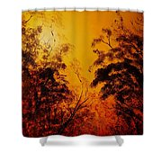 Morning Canopy Shower Curtain
