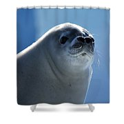 Morning Shower Curtain