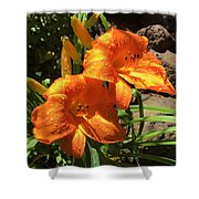 Morning Daylilies Shower Curtain
