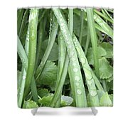 Morning Dew Drops  Shower Curtain