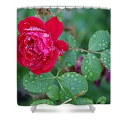Morning Dew On A Rose Shower Curtain