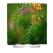 Morning Dew On Orange Flowers Shower Curtain