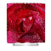 Morning Dew On Rose Shower Curtain