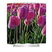 Morning Dew Tulips Shower Curtain