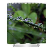 Morning Dewdrops 2 Shower Curtain
