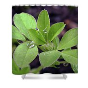Dewdrops On Leaves Shower Curtain