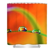Morning Dewdrops Shower Curtain