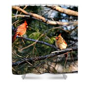 Morning Discussion Shower Curtain