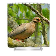 Morning Dove Shower Curtain