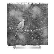 Morning Dove In The Rain Shower Curtain