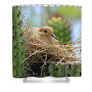 Mourning Dove Nest In A Cactus Shower Curtain
