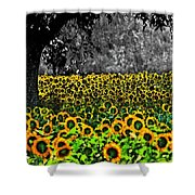 Morning Doves And The Sunflower Field Shower Curtain