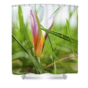 Morning Dream Shower Curtain