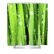 Morning Drops Shower Curtain