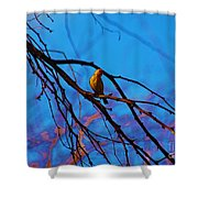 Morning Finch Shower Curtain
