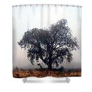 Morning Fog - The Delta Shower Curtain