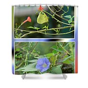 Morning Glories And Butterfly Shower Curtain