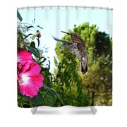 Morning Glories And Humming Bird Shower Curtain