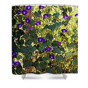 Morning Glories Shower Curtain by Margie Hurwich