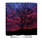 Morning Glory 1 Shower Curtain