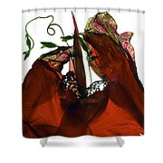 Morning Glory Canna Red Shower Curtain