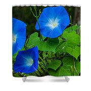 Morning Glory Family Shower Curtain